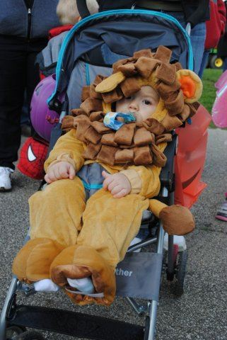 Young Child in Lion Costume