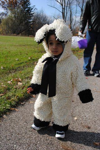 Young Child in Sheep Costume
